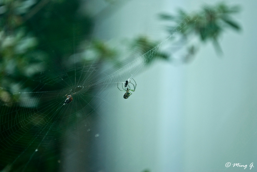 Spider's Morning Catch