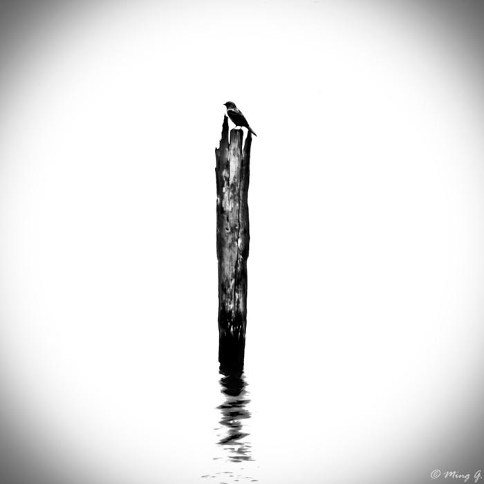 Bird on broken tree in water