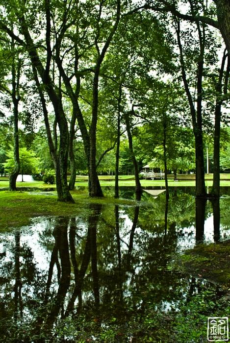 woods . gazebo . reflections