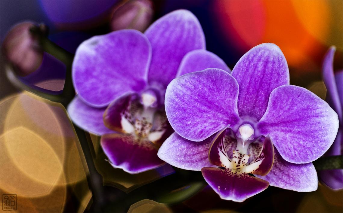Flower.Orchid II