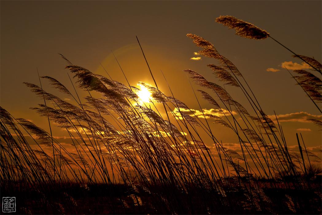 Sun Whisper