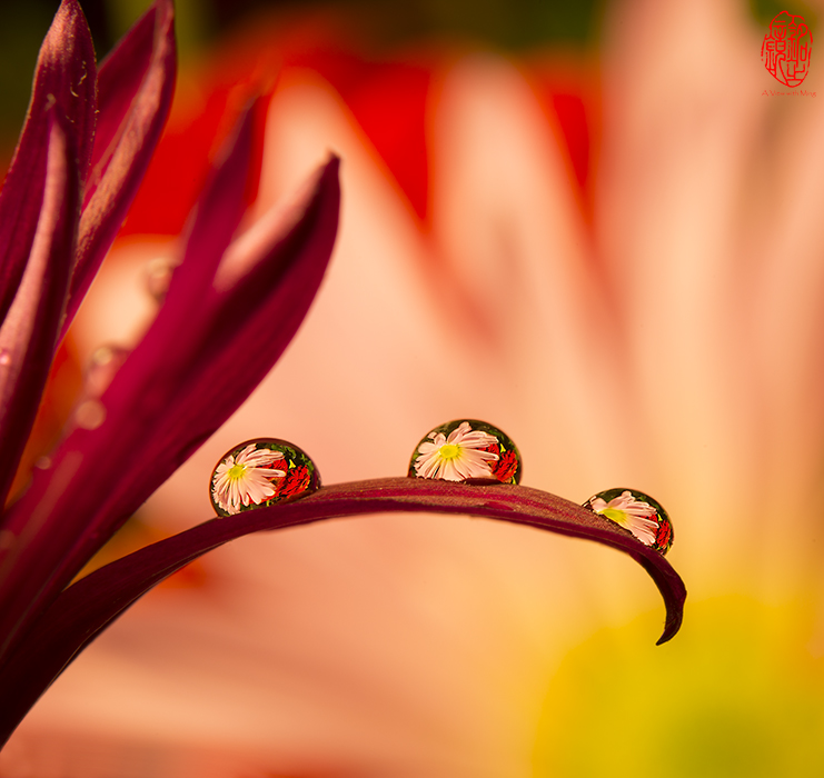 Drops of Beauty II