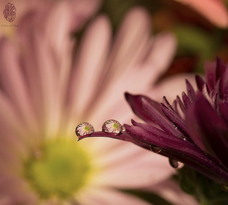 Drops of Beauty