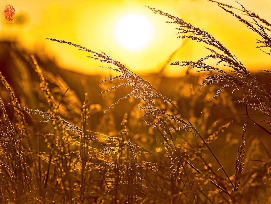 Sun Whisperer