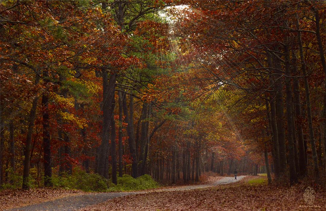 A Peaceful Walk