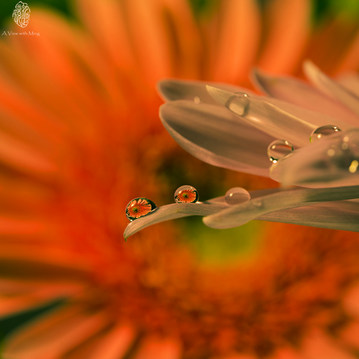 Drops of Beauty III by Ming Gullo
