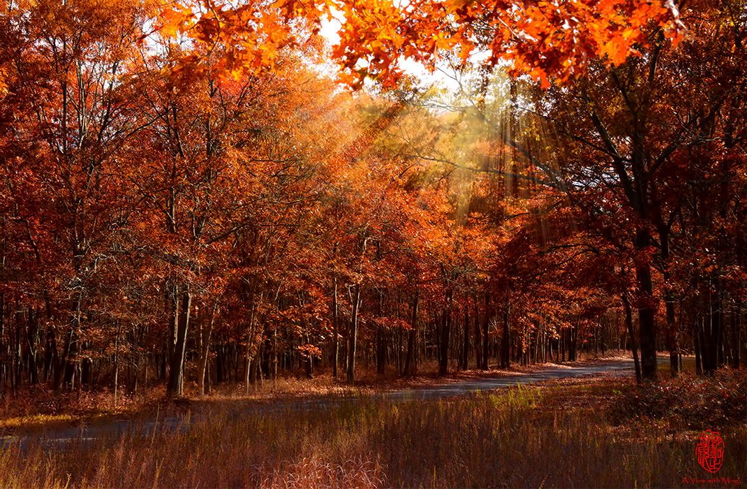 Fall in Light by Ming Gullo