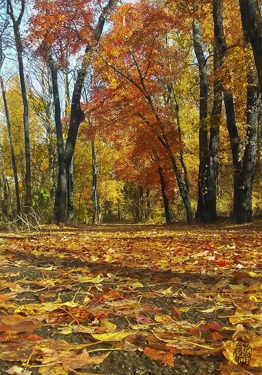 Caleb Smith State Park